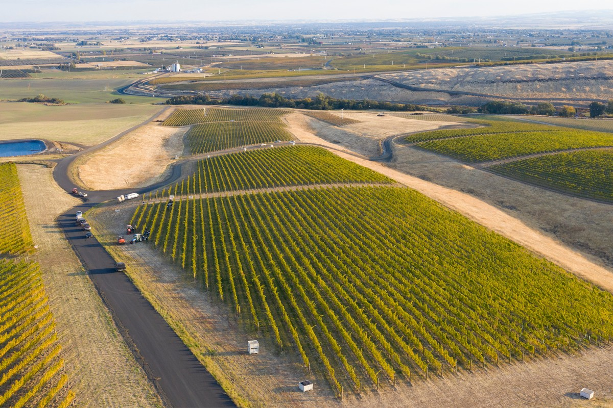 Pambrun Estate Vineyard drone shot