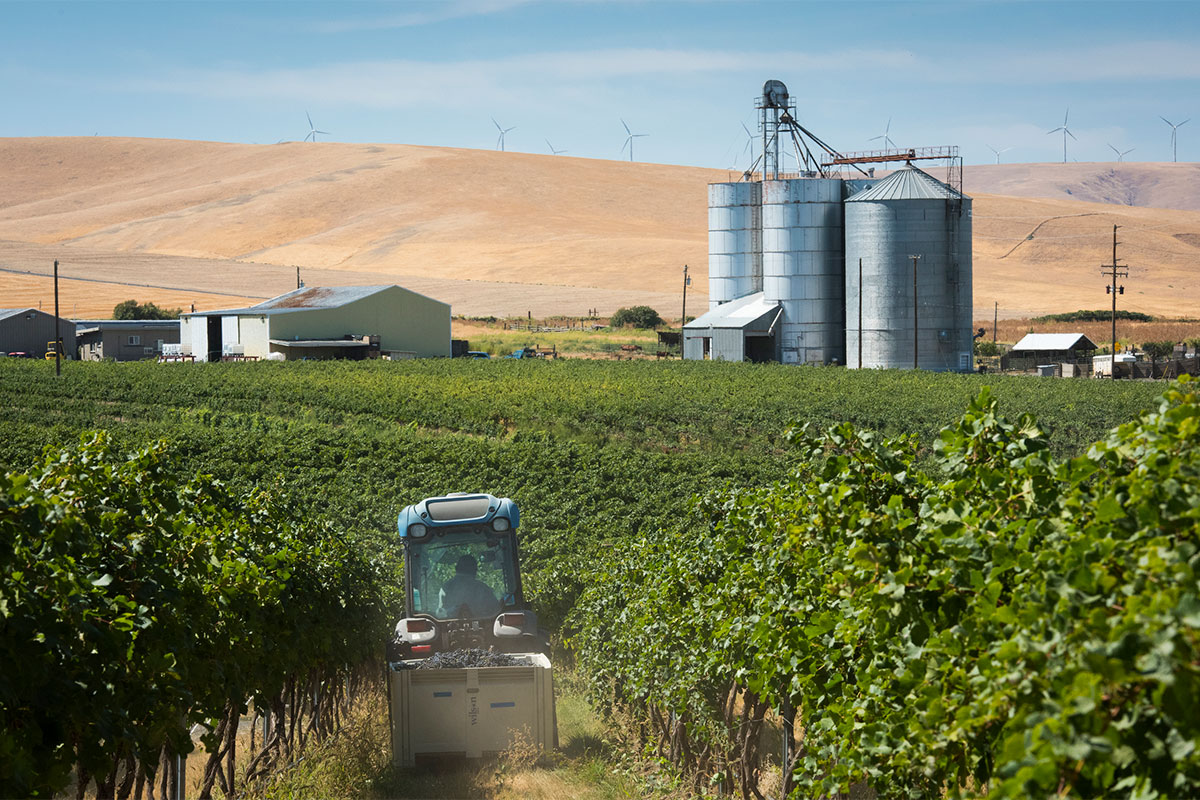 SeVein Vineyards and tractor in vines